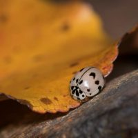 Tips to keep insects out of your home this fall