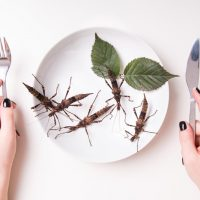Infestation risks in food items: where can insects be found and how can you prevent them?