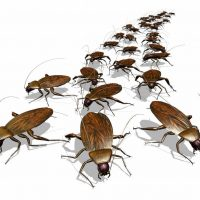 Can pests return after an infestation?