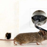 Using rodent proof caulking to prevent rodent infestations