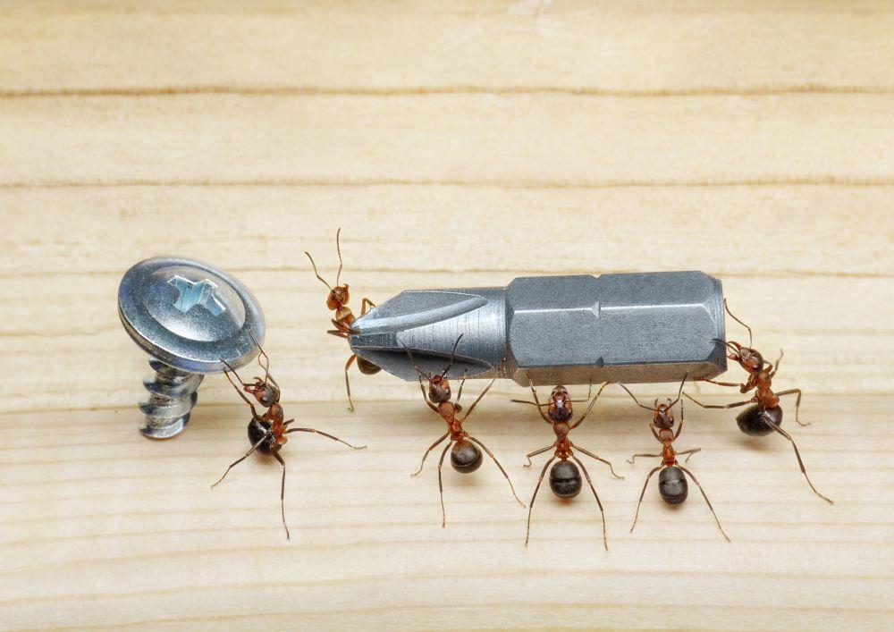 comment s 39 y prendre pour d truire un nid de fourmis charpenti res. Black Bedroom Furniture Sets. Home Design Ideas