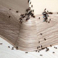 Une infestation de fourmis représente-t-elle un danger pour votre maison?