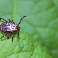 How to get rid of ticks quickly to keep your family safe
