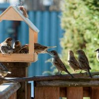 Can bird feeders cause rodent infestations?