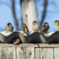 How can you keep birds from nesting in your roof?