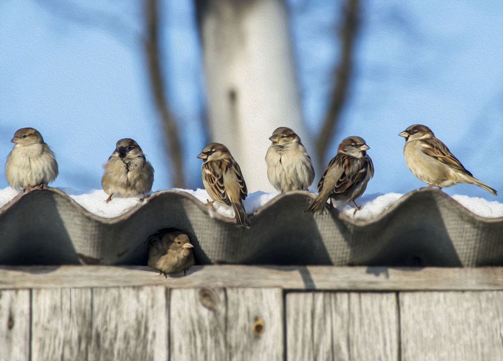 How To Keep Birds From Nesting In Your Roof Elite Pest Control