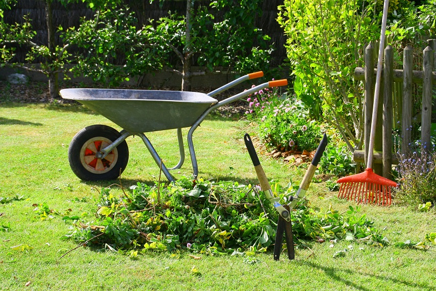 Entretenir-jardin--eloigner-souris