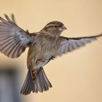 How to get a bird out of your house: Our exterminators' advice