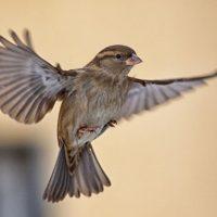 Comment faire sortir un oiseau de la maison? Nos conseils d'exterminateurs