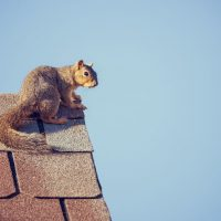 Keep squirrels away from your home with these simple methods