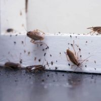 Pest infestation in a rental property: Who is responsible and should contact the exterminator?