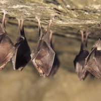 How do you get rid of bats on your property?