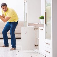 Bugs in an Apartment: What Should You Know as a Landlord?