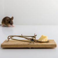 La liste ultime des meilleurs appâts pour les souris