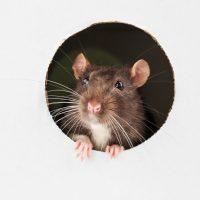 Tout ce que vous devez savoir sur la souris